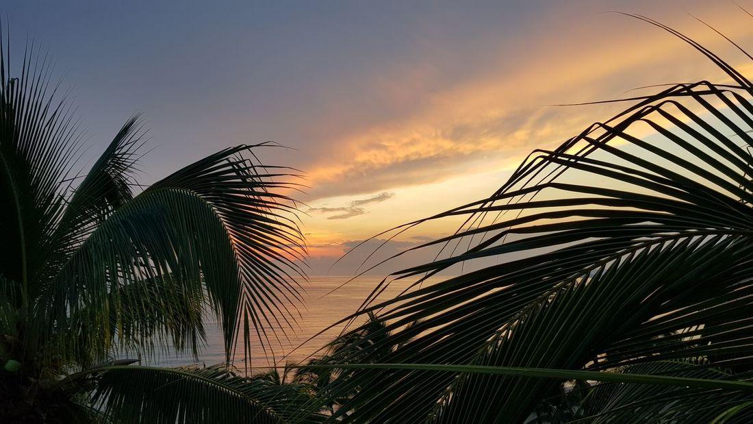 Tree Palm Tree Sunset Silhouette Palm Leaf Sky Cloud - Sky Close-up
