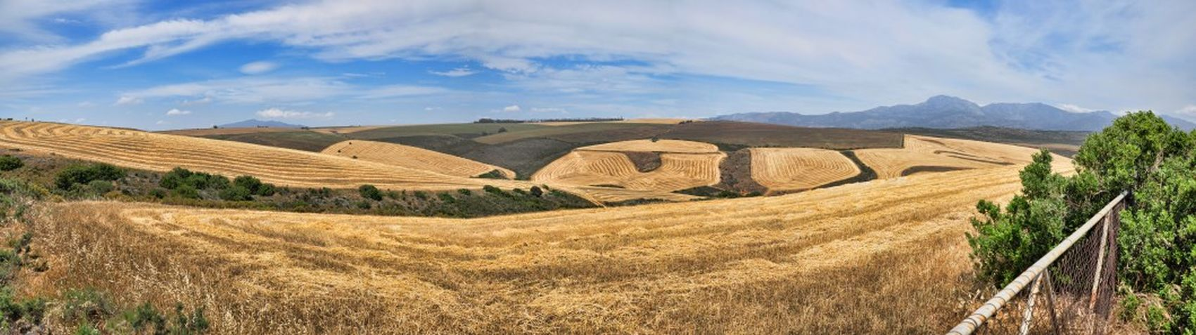 Wheat fields. Photography Scenicview Landscape Panorama
