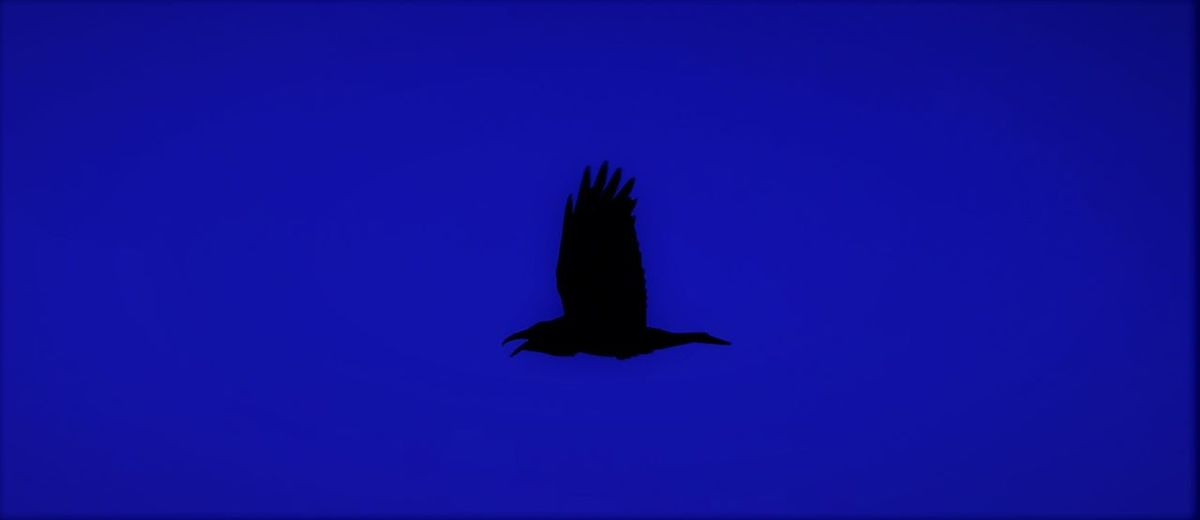 Bird flying against blue sky