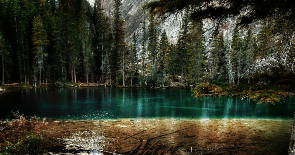 this water is just ridiculous! Beauty In Nature Calm Clear Waters EyeEm Nature Lover Forest Glacier Lake Its Really That Colour Lake Lakeshore Mother Nature Is My Homegirl Mountain Addict Mountains Nature Outdoors Remote Tranquil Scene Tree Turquoise Water