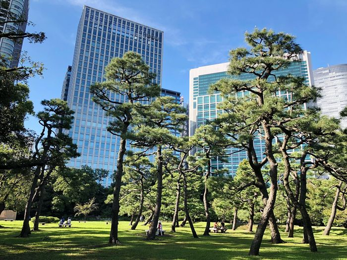 Nice day at the park Plant Sky Tree Nature Low Angle View Day No People Park - Man Made Space Building Exterior Architecture