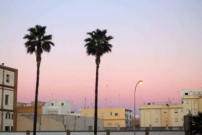Hay palmeras despeinadas esperándote en la arena Palm Tree Sunset City Outdoors Sea No People Cityscape Sky Day Photooftheday Photographer Photography Blue City Thursday Cadiz Beach SPAIN
