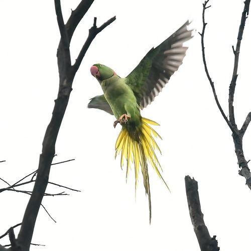 Bird Cockatoo