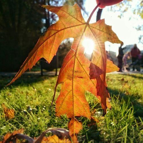 Autumn series Mobilephotography Autumn Eye4photography  EyeEm Nature Lover EyeEm Best Shots Colors Bestoftheday Naturelovers Lovelife Sony Xperia Z3 Photooftheday Nature Photography Beautiful Nature