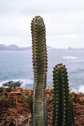 Close-up of succulent plant in sea against sky