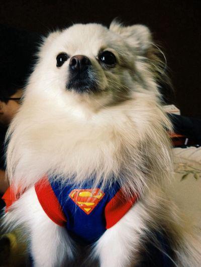my superhero :3