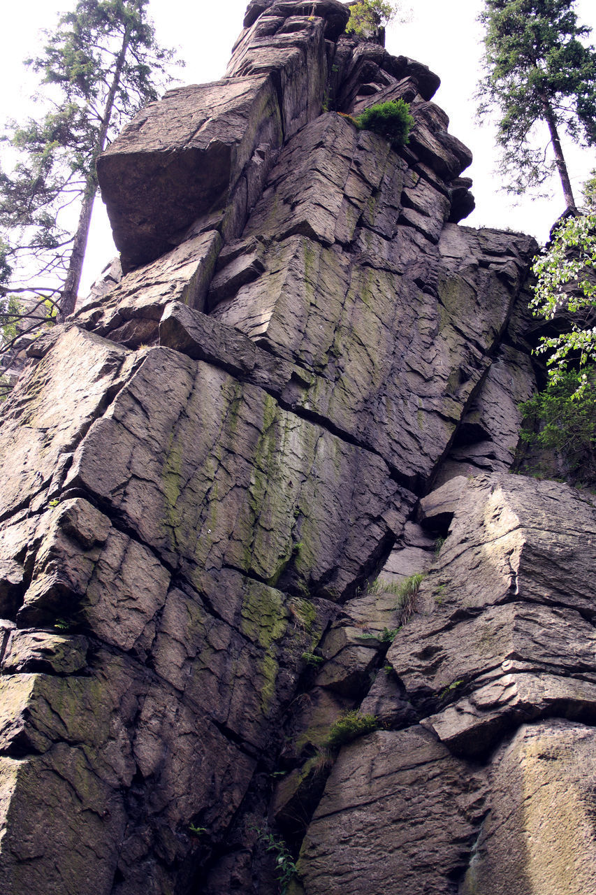 tree, plant, nature, day, no people, low angle view, rock, rough, textured, rock formation, tree trunk, rock - object, solid, trunk, tranquility, natural pattern, outdoors, land, sky, pattern, bark, eroded