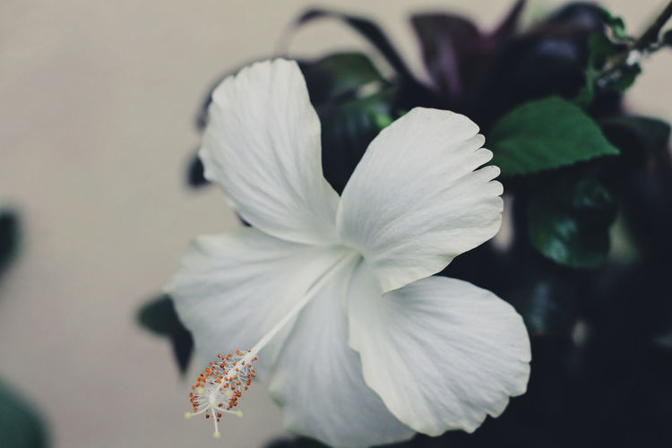 Beauty In Nature Close-up Day Flower Flower Head Flowering Plant Focus On Foreground Fragility Freshness Growth Inflorescence Nature No People Outdoors Petal Plant Pollen Selective Focus Vulnerability  White Color