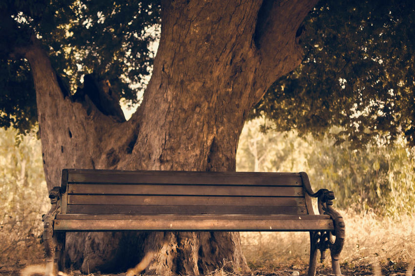 Mother Nature Relaxing Sit And Relax... Animal Themes Close-up Day Nature No People Outdoors Relax Tree Tree And Bench Wood - Material Woods
