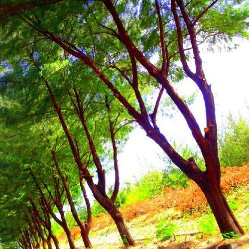 Road Roadsafety Street Greenstreet maldives hulhumale instagreen instagold instagram summer instamood instaworld instatalent instagrapher instabeauty instaphotograpy instagood uniquemaldives instafan instagramhub photoaday photocontest instamv instahunt