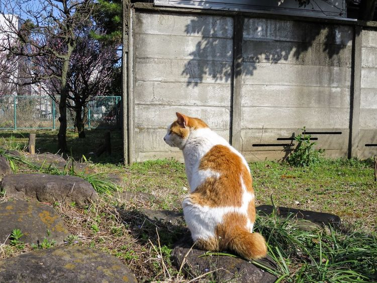 Stray Cat Cat Cat Watching Animals Garden at Minatoku 芝公園 in Tokyo Japan