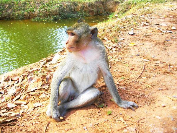 Animal Animal Behavior Animal Themes Baboon Baboon Portrait Nature One Animal Vertebrate
