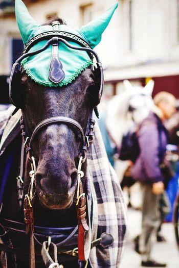 Open Edit Horse Animal Portrait Getting Inspired Travel Photography EyeEm Best Shots