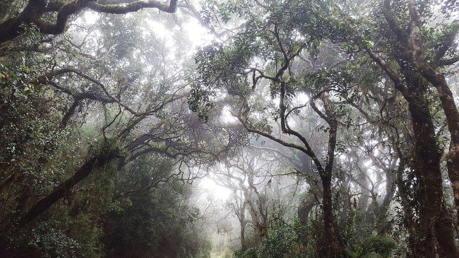 Foggy Nuwara Eliya Sri Lanka Horton Plains National Park Forest Cloud Forest Mist First Eyeem Photo EyeEmNewHere