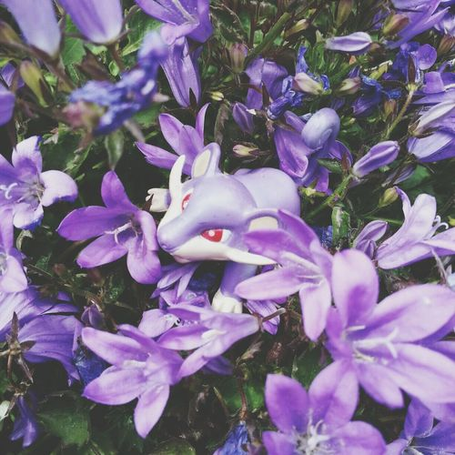 He seems to like the flowers! Rattata Pokémon