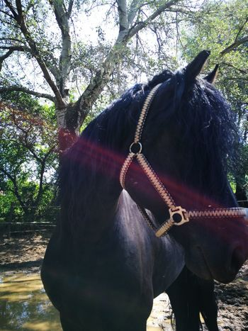 Horse Tree Animal Body Part Horseback Riding