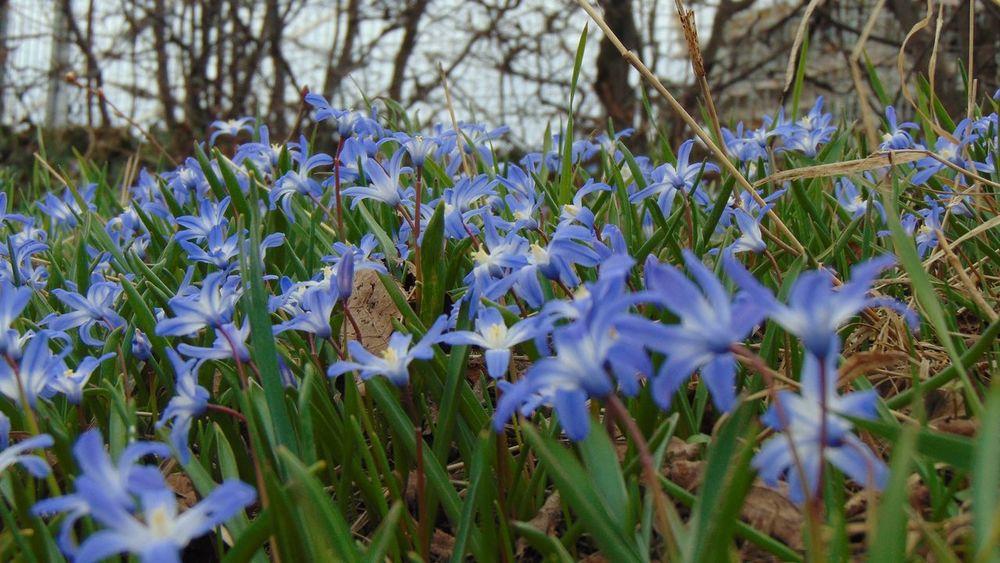 Flowers Flower EyeEm Nature Lover Enjoying The View Macro Spring Spring Flowers Nature Looking Into The Future EyeEm Best Edits