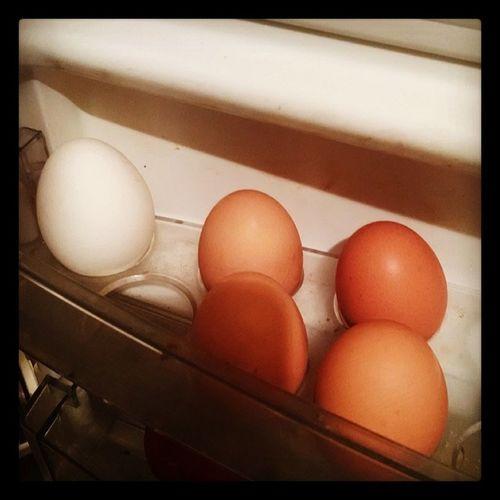 Se tiro !! Instamoment Racism Egg hahahah