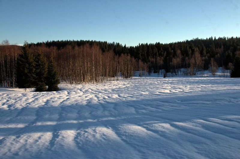 Snow ❄ Winter In Šumava Beauty In Nature Clear Sky Cold Temperature Day Forest Frozen Landscape Nature No People Outdoors Scenics Sky Snow Tranquil Scene Tranquility Tree Winter Šumava Šumava Bohemia Shades Of Winter