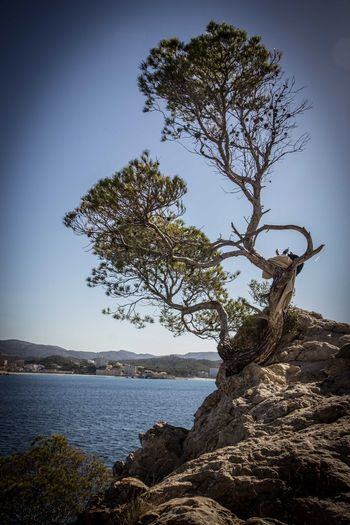 Beauty In Nature Clear Sky Cliffs Cliffside Dead Tree Lonely Tree Lonley Mallorca Mediterranean  Nature No People Outdoors Peguera Rocks Scenics Sea Sky Stone Material Tranquility Tree Water