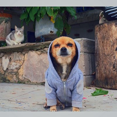Rocky is cold. Swag Swagg I Love My Dog Dogstagram Dogs Dog Love Dogoftheday My Dog DogLove Doggy