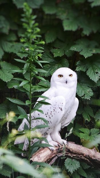 Cute showy owl Bird No People Nature Animal Wildlife Tree Day Beauty In Nature Perching Outdoors Cockatoo Close-up Mammal Snowy Owl White Owl Portrait. Owl Eyes