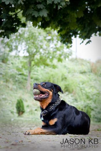 Animal Photography Animals Cat Photography Dog Photographer Dog Photography Pet Photograph Pet Photography  Photography