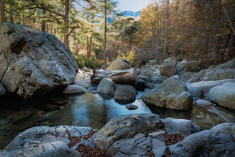 Rock Tree Water Forest Plant Tranquility Land No People River Flowing Water Beauty In Nature Rock - Object Stream - Flowing Water Automne🍁🍂🍃 Tronc Vizzavona Foret Corse Corsica ❤️
