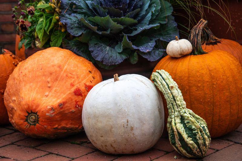 Close-up of pumpkin pumpkins at market stall