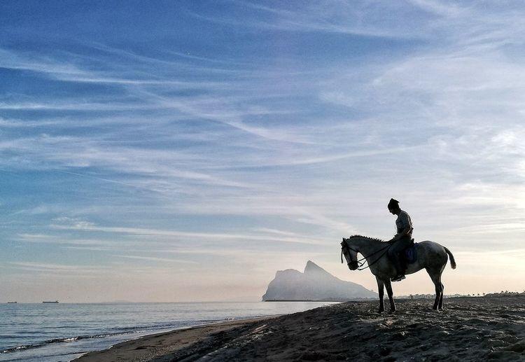 Silhouette man riding horse at beach against sky