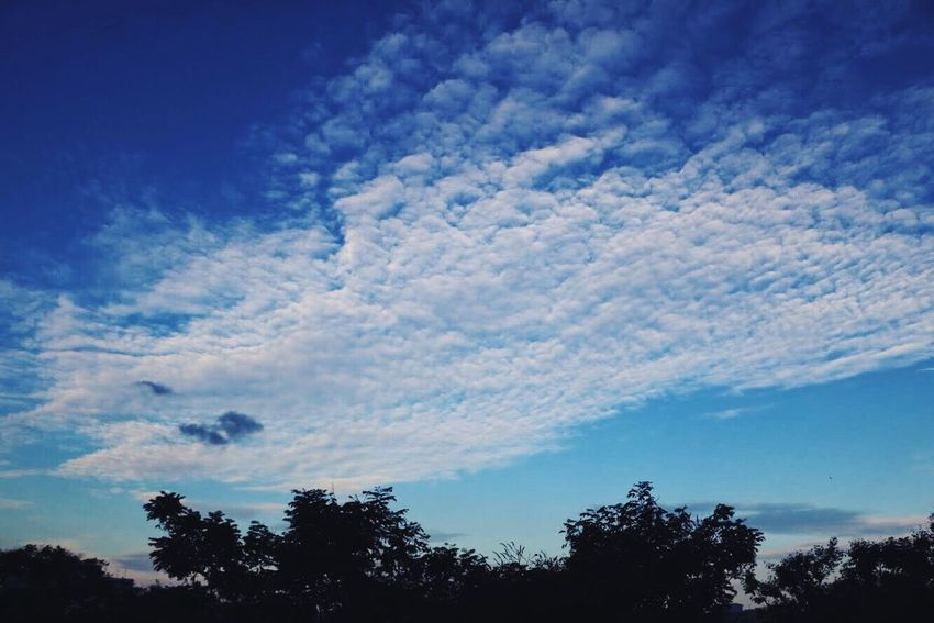 Lovely sky with clear clouds Sky Tree Beauty In Nature Low Angle View Nature Cloud - Sky Blue Silhouette No People Scenics Tranquility Tranquil Scene Outdoors Day Growth Singapore VSCO The Purist (no Edit, No Filter) Dramatic Sky Cloudscape Sky Only Fluffy Tranquility Softness Backgrounds