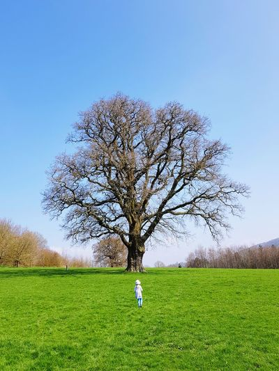 young girl looking at oak tree Child Girl Tree Of Life Oak Tree Tree Blue Sky Green Grass Branches Big Tree Old Tree Young Girl Tree Rural Scene Field Single Tree Sky Grass Green Color