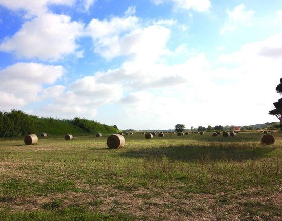 Fieno Estate Covoni Field Sky And Clouds Cielo E Nuvole Verde Prato Natural Beauty Nature Nature Photography Naturelovers Enjoying Life Hay Hay Roll Hay Bales Hay Bails