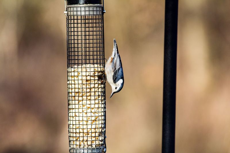 Side view of bird perching on feeder