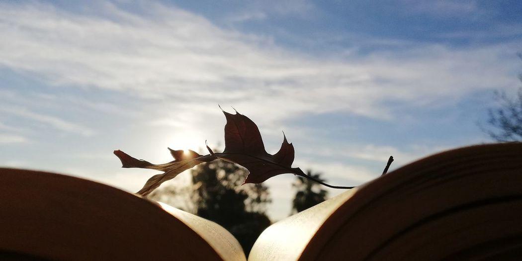 🍁🍁🍁🍁 Leaf