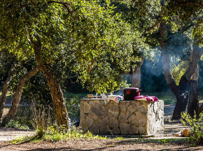 Outdoor cooking in woodland in Pinar del Rey, San Roque, Spain Tree Plant Growth Smoke - Physical Structure Sunlight Outdoors Forest Leisure Activity Green Color Nature Outdoor Cooking Outdoor Cookery Outdoor Cook Alfresco Cork Tree Cork Trees Cooking Cooking Time Cookery Land