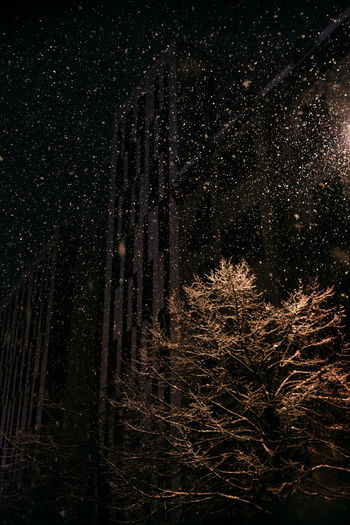 Low angle view of pine trees in forest at night