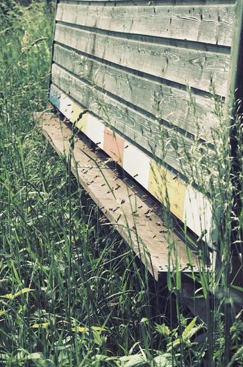 The Essence Of Summer Walking Around Eyemnaturelover Nature's Diversities The Great Outdoors - 2016 EyeEm Awards Insect Taunus Honey Bee