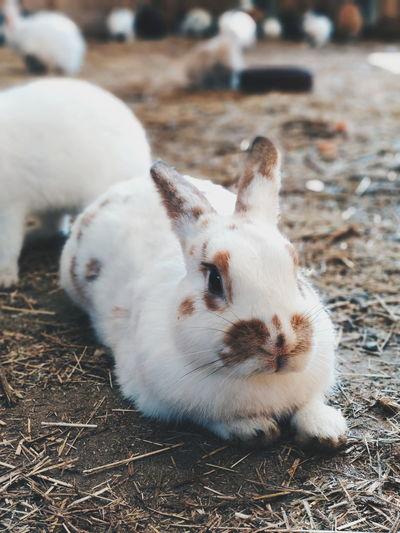 EyeEm Selects Pets Portrait Cute Close-up Grass Rabbit - Animal Rabbit Animal Ear