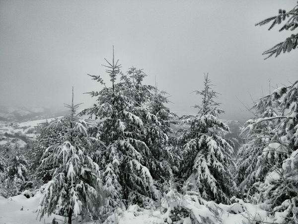 Nevado. Inverno Galiza Neve Snow O Cebreiro Landscape