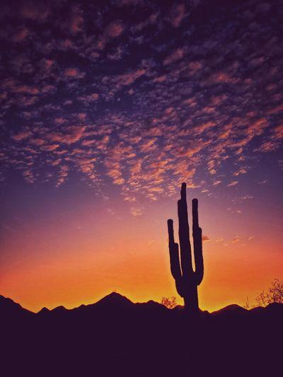 Silhouette cactus against orange sky