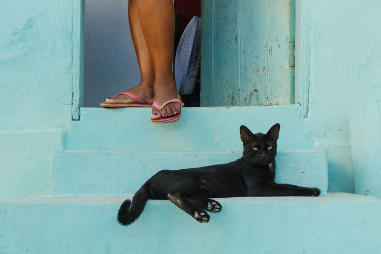 Black cat rests on the gaze of his mistress Chapada Diamantina Domestic Animals Domestic Cat Door Entrance Feline Human Leg Lifestyles Low Section One Animal One Person People Pets Real People Sitting Stairs The Street Photographer - 2017 EyeEm Awards Women Place Of Heart Pet Portraits