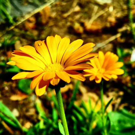 Flower Collection Flowers Orange Flower Relaxing Eye For Photography Hello World Nature_collection Eye4photography  Objektifim Eyemphotography