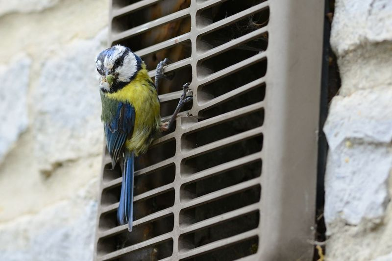 Close-up of bird perching on grate
