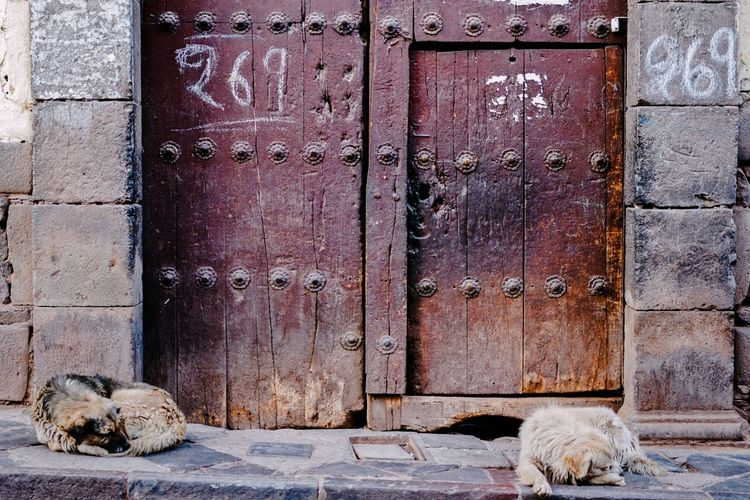 Two dogs resting in front of closed doors