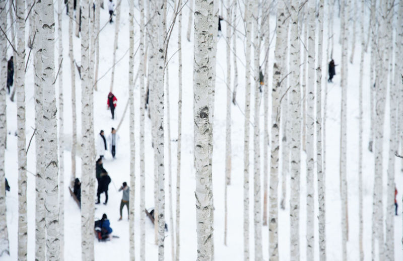 People Amidst Trees In Forest During Winter