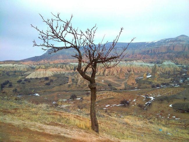 Blackberryphoto Blackberrypassport Tree Landscape Capadocia