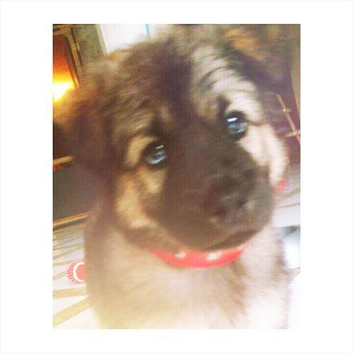 Mydog♡ Puppy Love Bestfriend