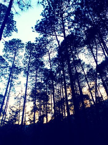 Blaus / Azules Tree Low Angle View Nature Beauty In Nature Tranquility Blue Blaus Azules Nature_collection Trees And Leaves Colour Of Life Colours Of Nature Chiapas, México Personal Perspective Godsbeauty Leaves 🍁 Leaves🌿 Natural Beauty Mexico Trees Silhouette Tree Nature Nature_perfection