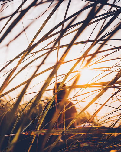 Close-up of grass with woman in background during sunset